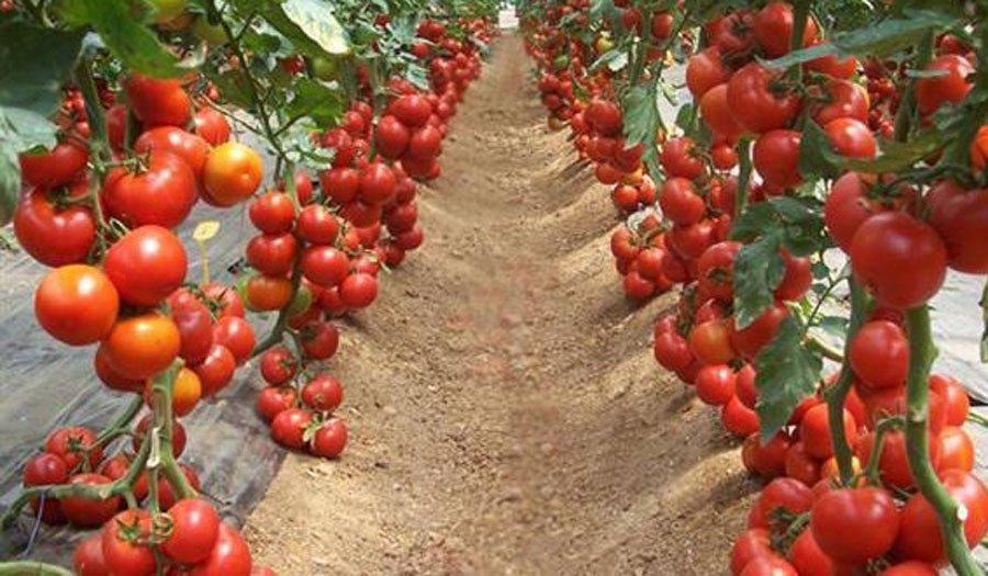 Çdo vit e më pak prodhime bujqësore