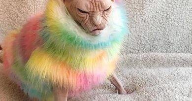 """Loki, macja më """"inatçore"""" në botë (FOTO)"""