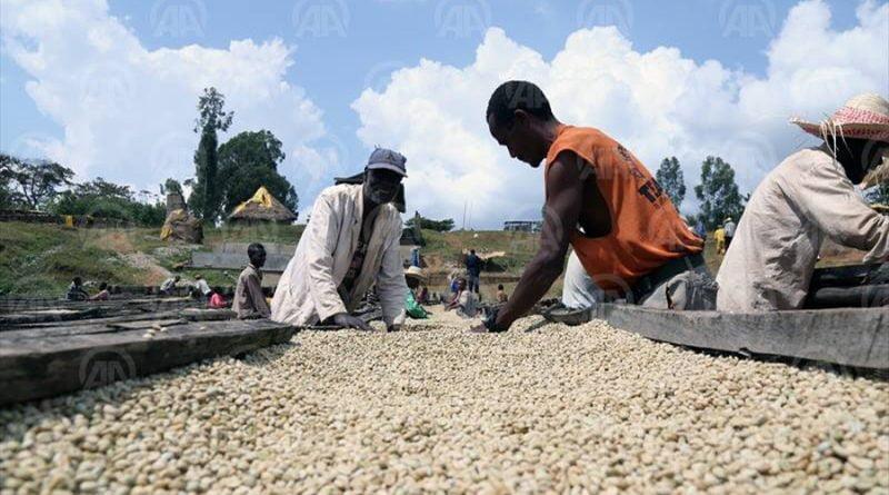 KAFEJA STARBUKS. Nnë Etiopi blihet për 3, në Amerikë shitet për 200 dollarë (FOTO)