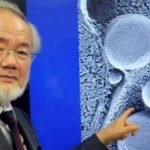 Shkenctari Japonez, fitues i çmimit Nobel, tregon se si pastrohet trupi gjatë Ramazanit