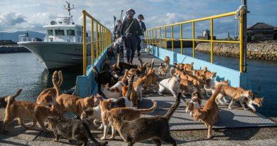 Më shumë mace sesa njerëz (FOTO)