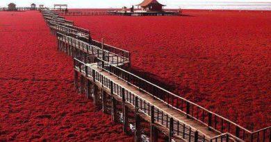 Plazhi i kuq i Kinës, vendstrehimi për 236 lloje zogjsh (FOTO)