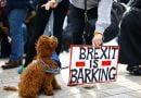100 mijë protestues pushtojnë Londrën, ja ç'ka ndodhur