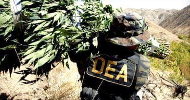 Legalizimi i drogës, rruga më e mirë për ta luftuar!