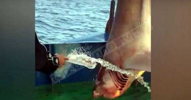 E rrallë: Kapet peshkaqeni 400 kg në Durrës