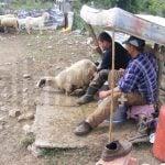 SHQIPËRIA PËRTEJ BREGDETIT: Të dëshmosh nomadët e fundit të Ballkanit
