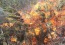Rritet numri i zjarreve në rrethinën e Dibrës