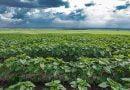 Reshjet kritike për bletarinë, të mirëseardhura për kulturat bujqësore