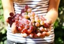 Vetitë ushqyese të rrushit