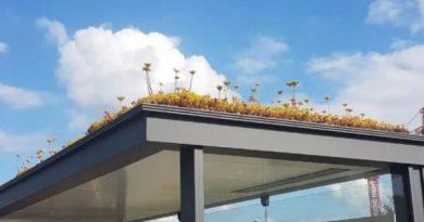 Holanda mbjell lule në stacionet e autobusëve si dhuratë për bletët