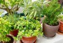 Kështu ndikon tymi i duhanit tek bimët e shtëpisë