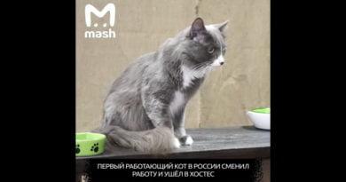 Macja e parë e punësuar në Rusi ndryshon profesion (FOTO)