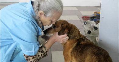 Masha si Hatchiko, qenushi që pret prej muajsh të rishohë të zotin (FOTO)