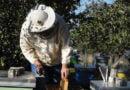 Ulen rendimentet e mjaltit, ndryshimet klimatike kanosin bletarinë