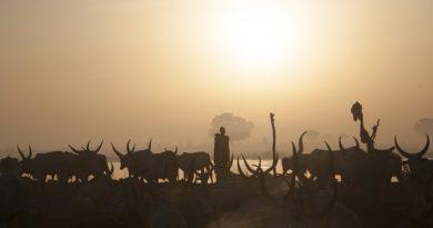 Të pandarë nga lopët, jeta e veçantë e fisit sudanez